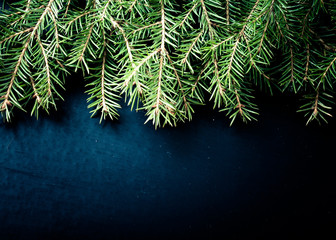 branches of a Christmas tree on a dark background. With space fo