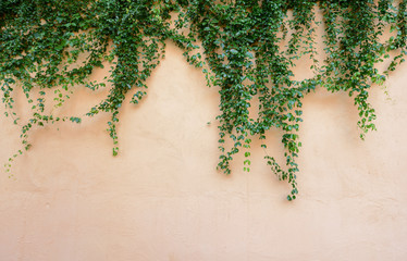 ivy Wall mural