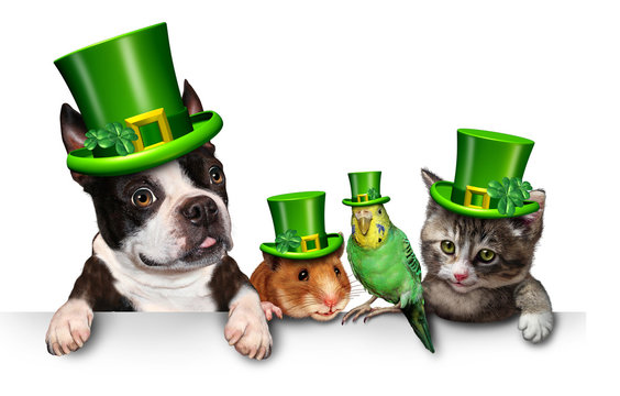Green Spring Pet Sign