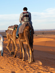 Camel trip through the desert