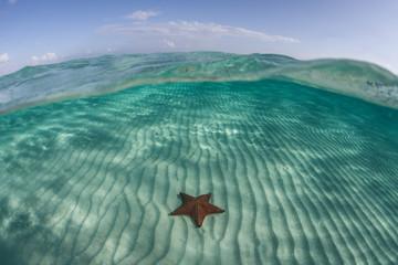 Wall Mural - Starfish on Sand