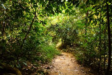 Trail in jungle