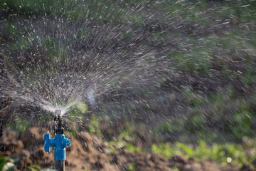 Sprinkler watering in the garden