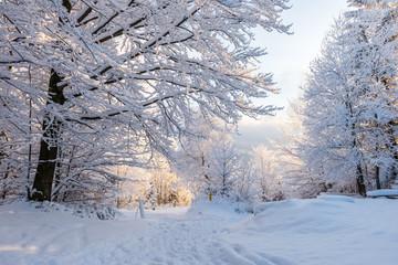Fototapeta Piękna zima w polskich górach - Beskidy