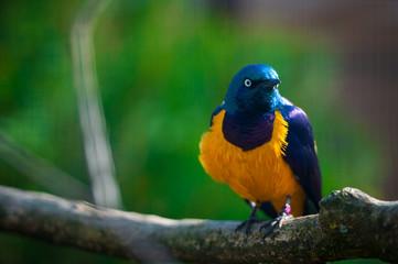 Beautiful bird sitting on a branch