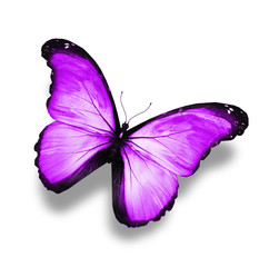 Blue, violet ,white butterfly, isolated on white