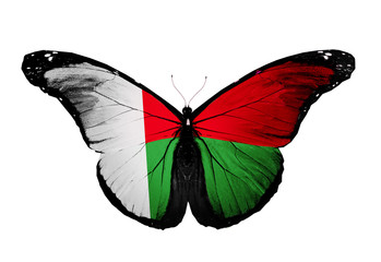 Madagascar flag butterfly, isolated on white background