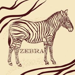 Savanna background with zebra in sepia
