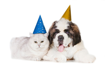 Saint bernard puppy with a grey cat dressed in birthday hats