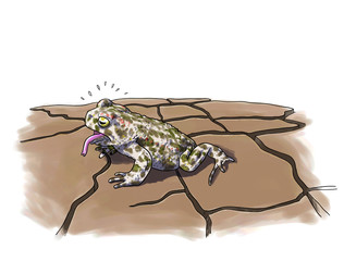 Toad drought