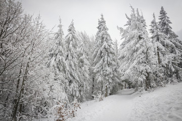 Winter in Beskidy mountains near Szyndzielnia, Klimczok and Blatnia, Beskid Slaski, Poland