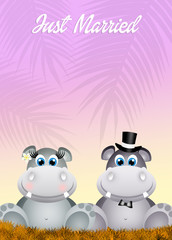 Wedding of hippos