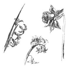 Spring flowers sketch