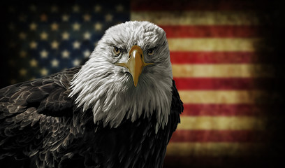Wall Murals Eagle American Bald Eagle on Grunge Flag