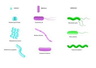 Ai vermi di bambino di un pinworm che trattare