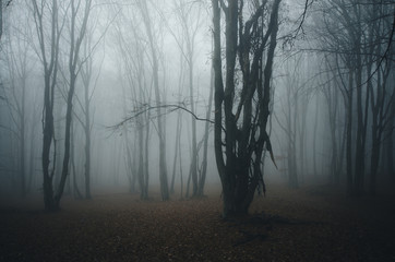 forest with tree in mist