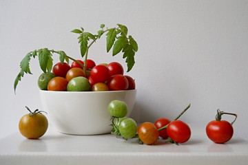 Green and red tomatoes in a white bowl with leaves.