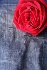red rose flower on blue jeans denim texture