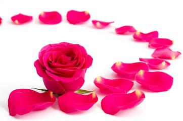 Rosenblüte und Blütenblätter