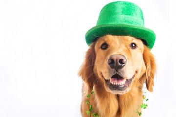 St. Patrick's Day Dog