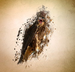 Falcon, abstract animal concept