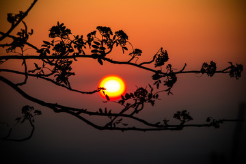 Tree branch and sunset