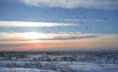 flock of birds in wintertime