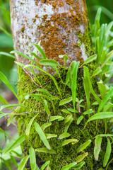 Parasitic plants are beautiful wood