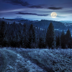 coniferous forest on a  mountain top at night