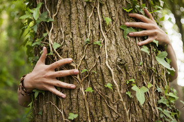 A person hugging an oak tree. Hands spread across the bark.