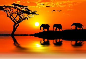 elefantes por la montaña