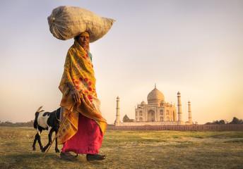 Indian Woman Carrying Head Goats Taj Mahal Concept Wall mural