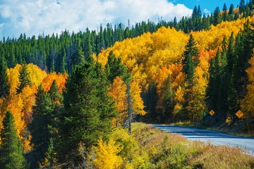 Wall Mural - Scenic Fall Colorado Road