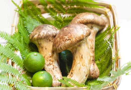 Matsutake mushroom of Japan