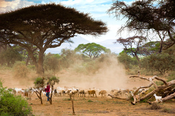 Masai animals