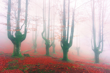 Wall Mural - magical forest in autumn