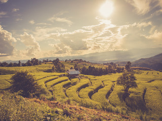 Rice terrace in asia with retro vintage style filter effect