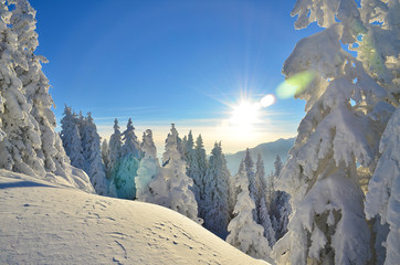 Winter panorama on mountain, sunlight and trees full of snow