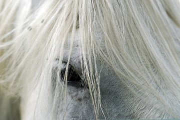 White horse's eye