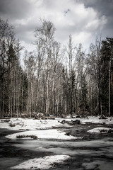 Snowy landscape in the spring forest. Toned