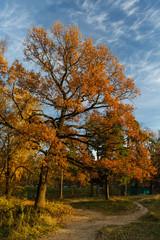 Autumn landscape with oak