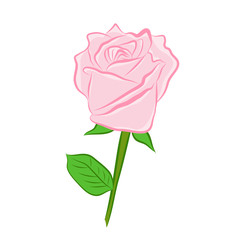pink rose isolated illustration