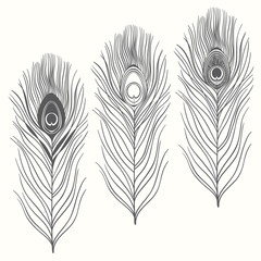 Set of peacock feathers  isolated on white background. Hand draw