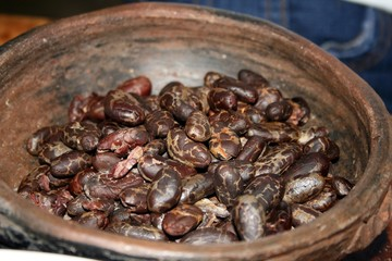 Kakaobohnen cacao Bohne