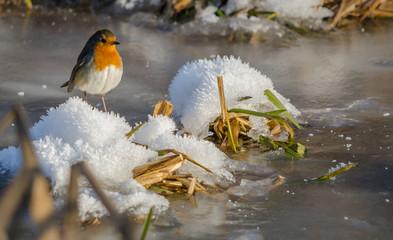 Fotoväggar - Frozen UK Christmas Robin