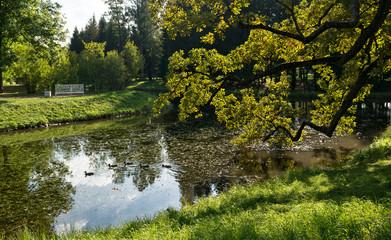 Ducks in Upper ponds of Catherine Park