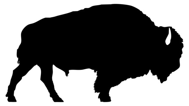 American bison silhouette isolated on white background.