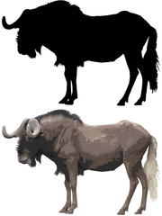Image and silhouette of wildebeest isolated on white background.