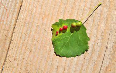 leaf illness