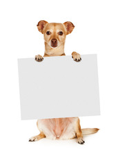 Wall Mural - Chihuahua Mix Dog Holding Blank Sign